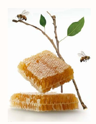 Honeybee Facts,honeybee,honey bee,Honey ,Honey Bees,honey bees